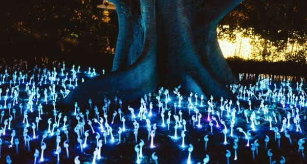 Tree surrounded by phosphorescent mushrooms